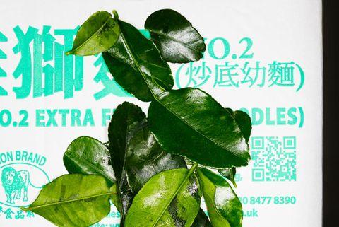 limoenblad kaffir lime