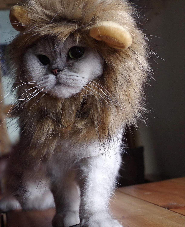 f2f7c4cda 26 Pet Cat Halloween Costumes 2018 - Cute Ideas for Cat Costumes