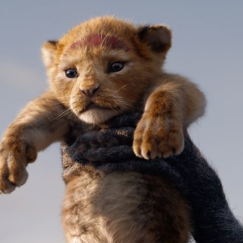 Is The Lion King Based On Hamlet Simba Is Hamlet