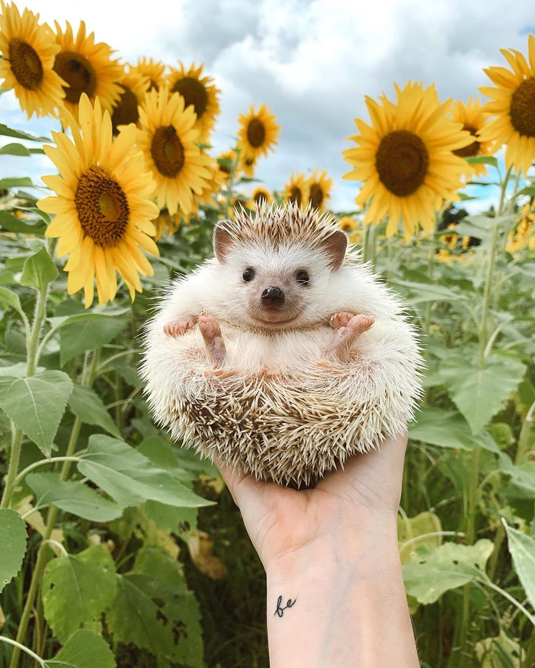 22 Animal Instagram Accounts You Have to Follow - Cute Animal Photos