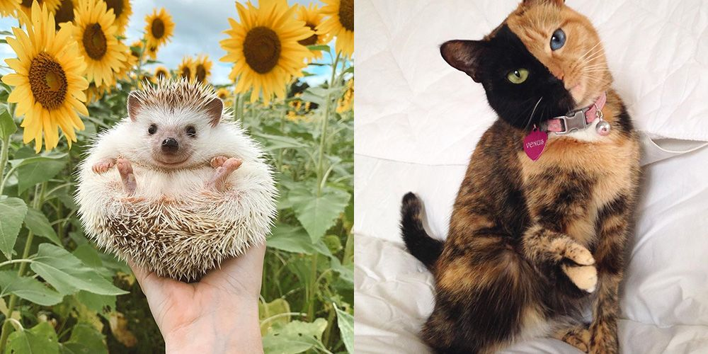 20 Animals You Absolutely Need to Follow on Instagram