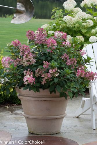 Outdoor Patio Plants Ideas
