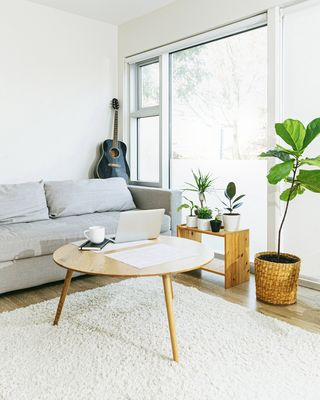 cozy living room in modern apartment with grey sofa, fiddle leaf fig, coffee table and guitar