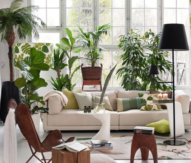 salón con muchas plantas