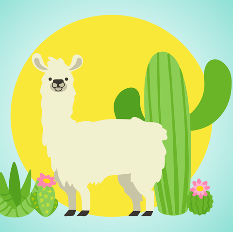 Llama Trend 2019 How Llamas Became More Popular Than Unicorns