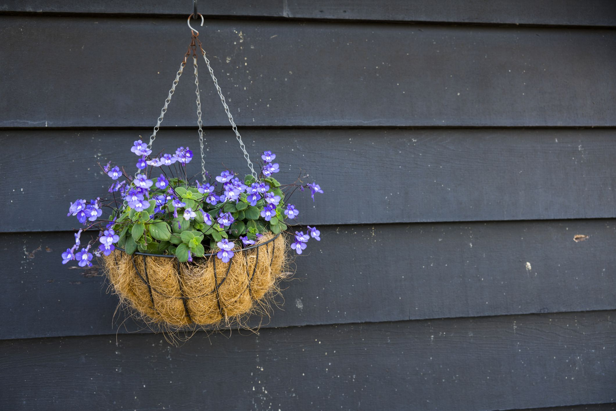 17 Best Hanging Plants Easy Plants For Hanging Baskets