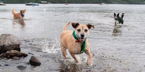 Loch Lomond - dogs - Paws Pet Photography