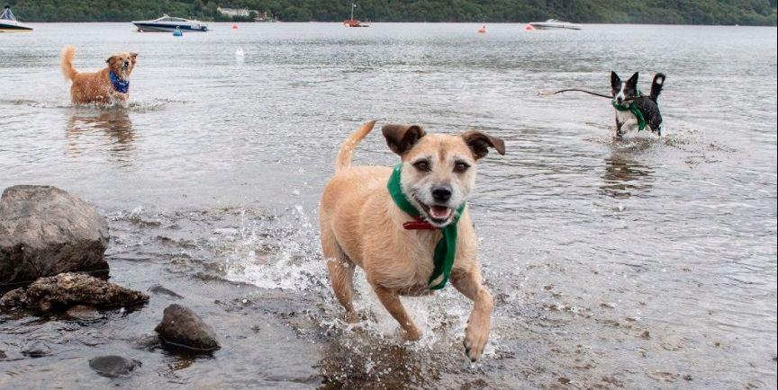 Loch Lomond - dogs - Paws Pet Photography