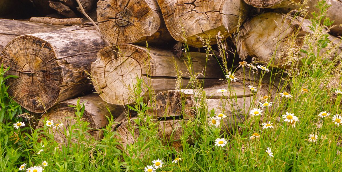Brits are being asked to make log piles outside wherever they can – here's why