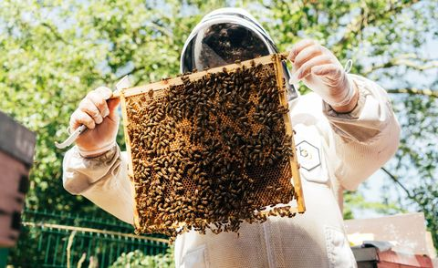Experience days for couples - Beekeeping in London