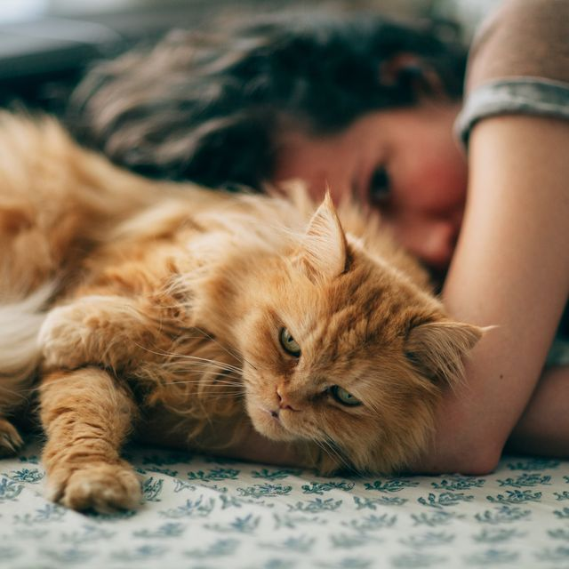 10 Long Haired Cats Maine Coon Norwegian Forest And More