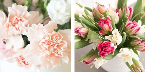 7 Gorgeous Long Lasting Flowers The Best Long Lasting Cut