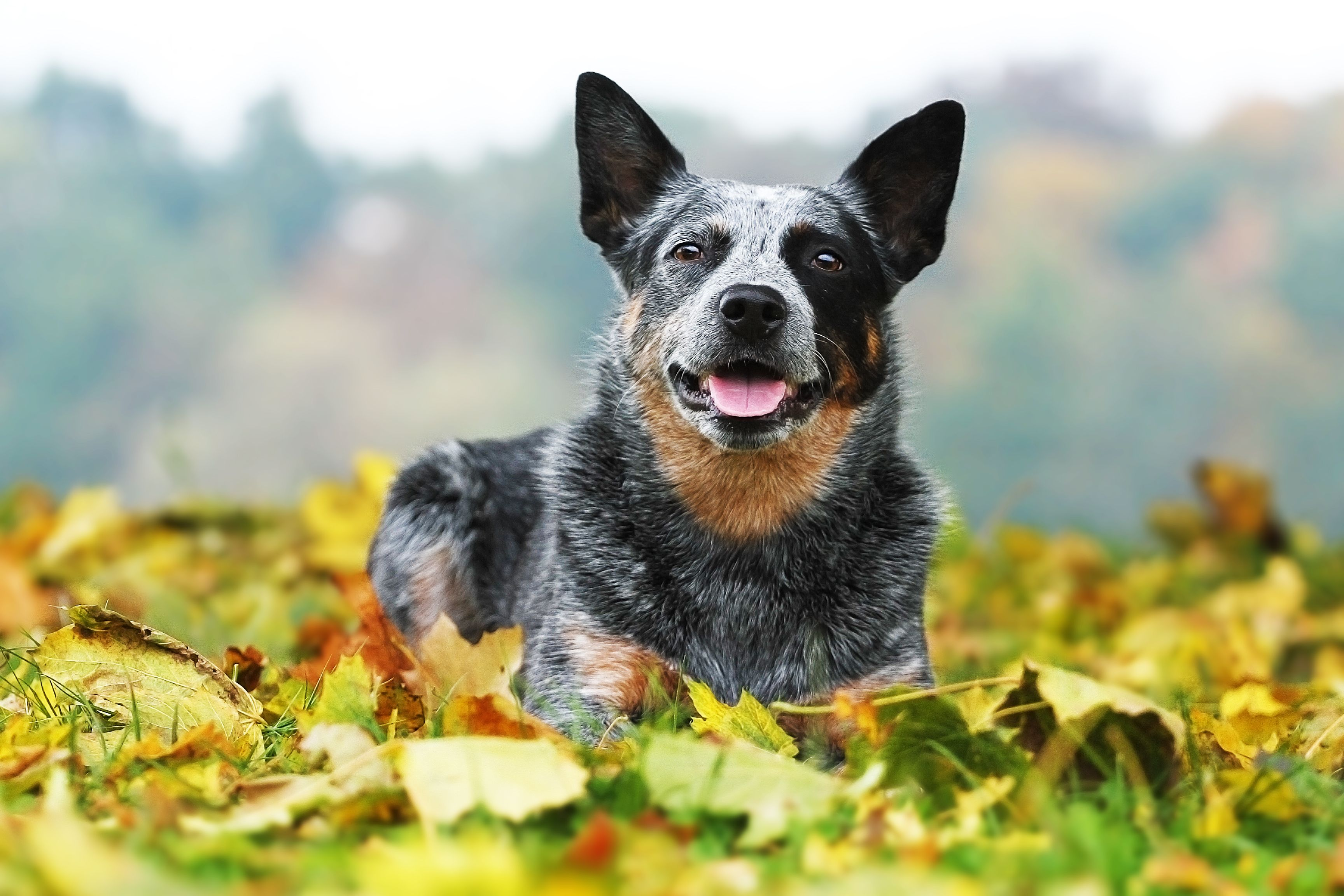14 Longest Living Dog Breeds That Will Be Your Companions For Years