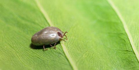 Insect, Invertebrate, Beetle, Macro photography, Leaf, Organism, Arthropod, Parasite, Bug, Pest,