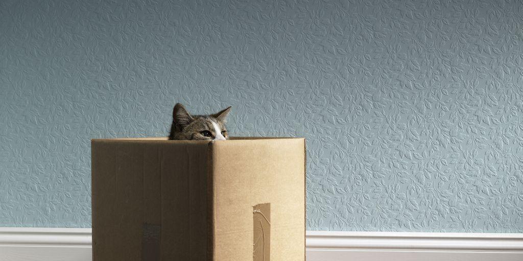 Descubren que los gatos no son antisociales