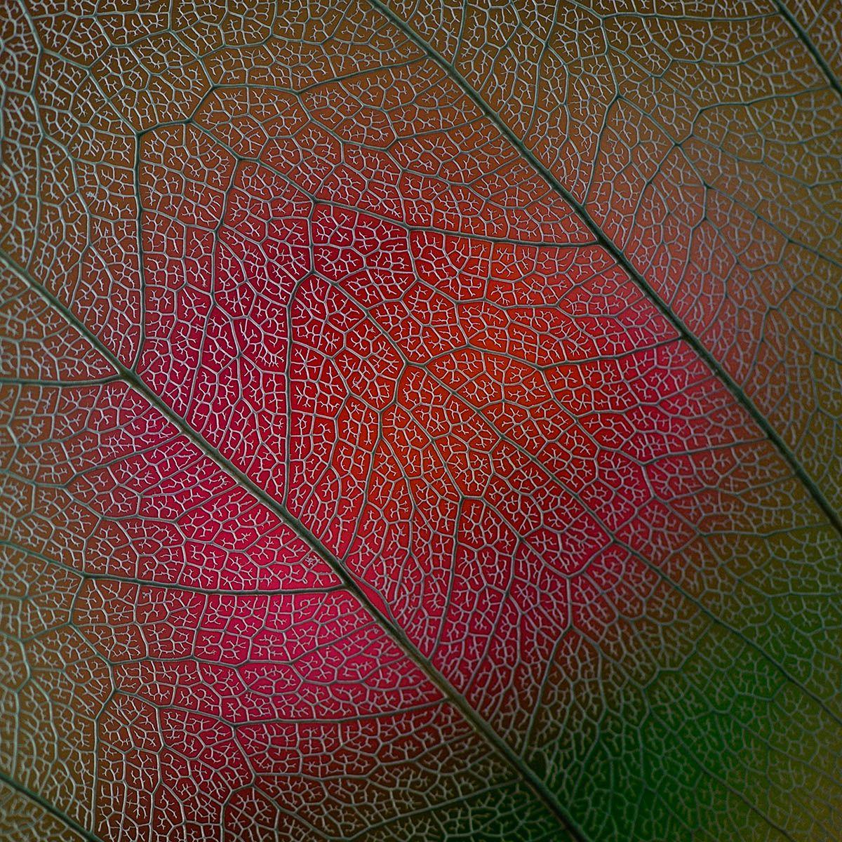 Lotte Gronkjaer-Funch - Bodhi Leaf - IGPOTY
