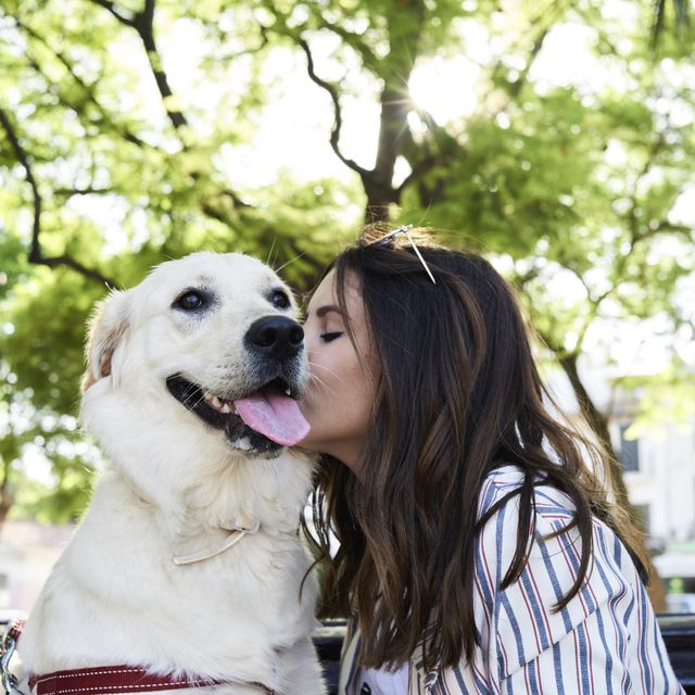 loving dogs most affectionate