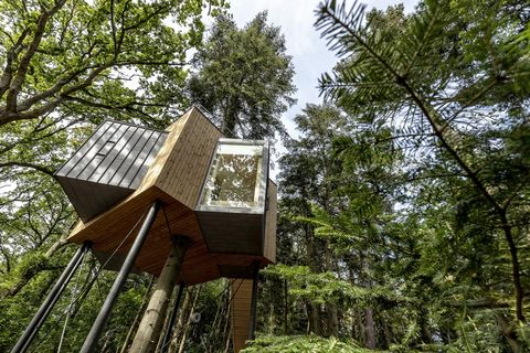 Tree, Architecture, Biome, House, Tree house, Forest, Woody plant, Plant, Roof, Building,