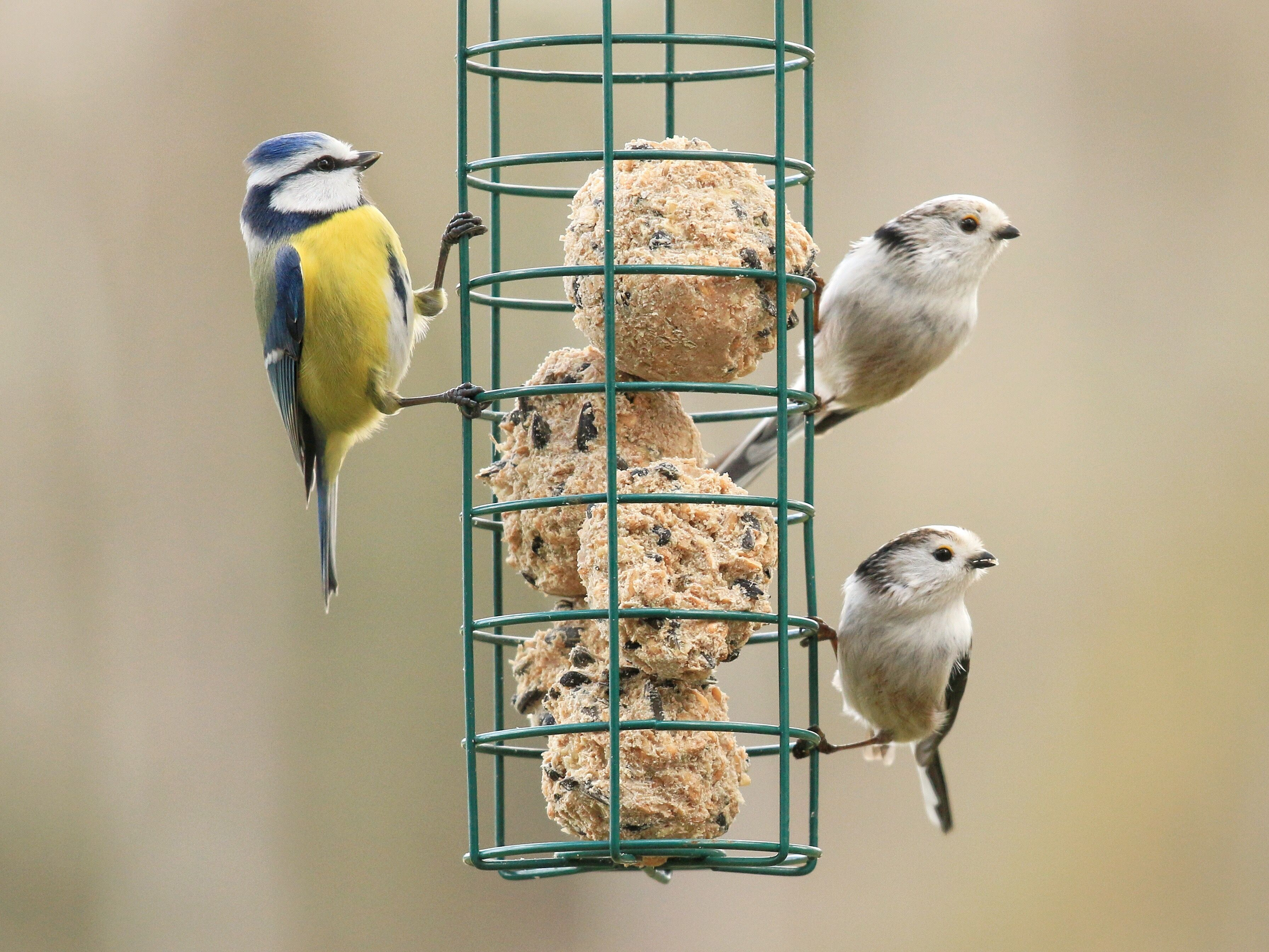How to Attract More Birds to Your Garden This Winter