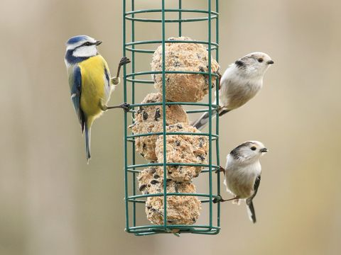 Low Angle View Of Birds On Feeder Outdoors