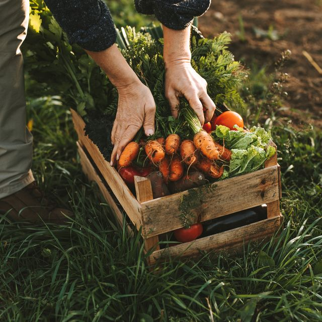 low angle view of farmer vegetables on field