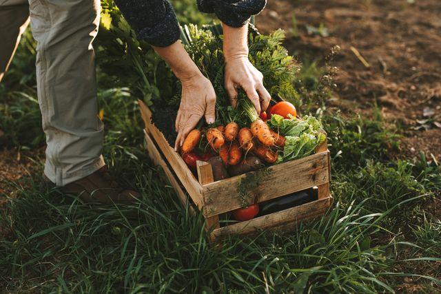 agricoltore che mette verdura in una cassetta