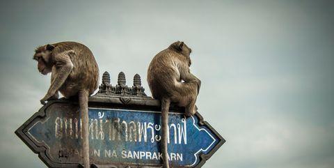 apen op een onbegrijpelijk straatnaambord