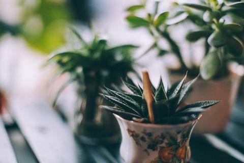 Houseplant, Flowerpot, Green, Flower, Plant, Leaf, Botany, Terrestrial plant, Plant stem,