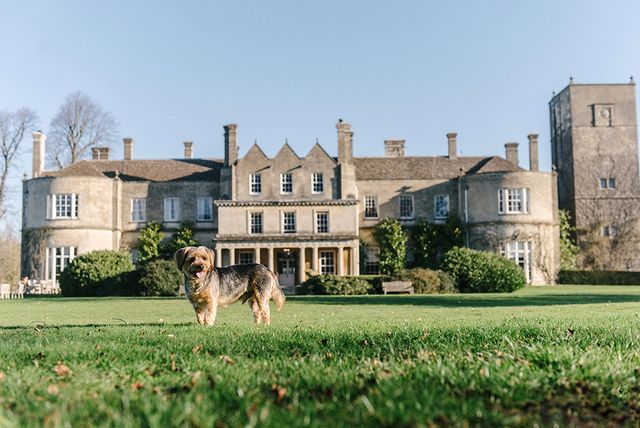 lucknam park   wiltshire's top pet friendly hotel for dog lovers in the cotswolds