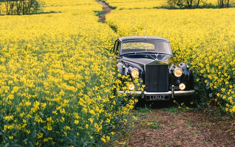 Motor vehicle, Yellow, Rapeseed, Classic, Car, Vehicle, Vintage car, Luxury vehicle, Natural environment, Plant,