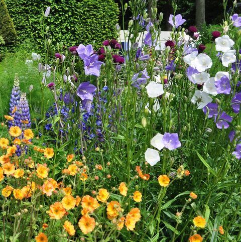 Lush garden
