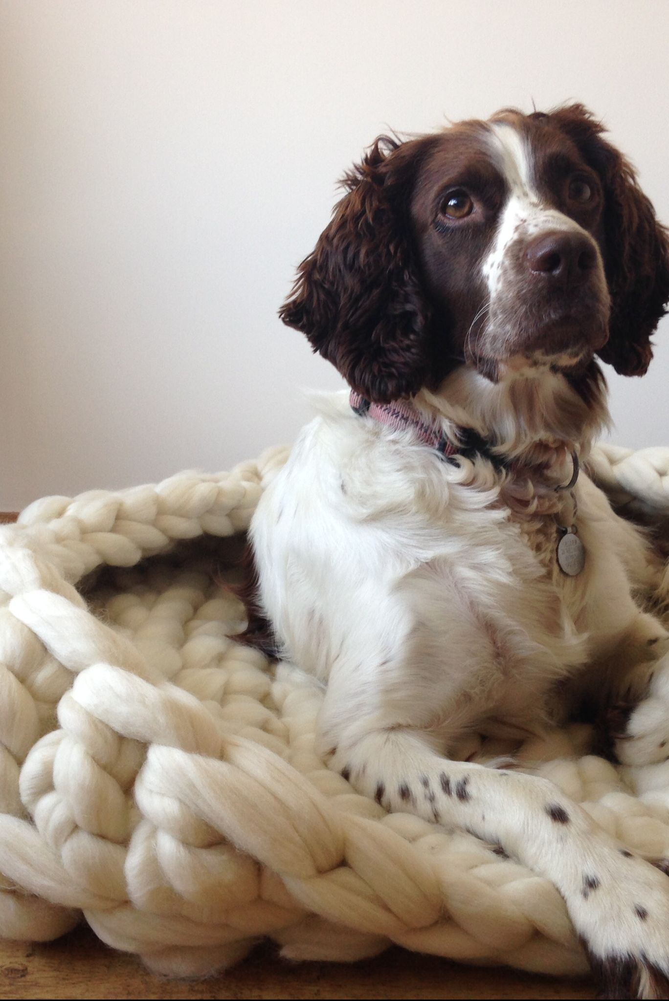 Luxury Knitted Dog Bed by Wool Couture, Notonthehighstreet.com