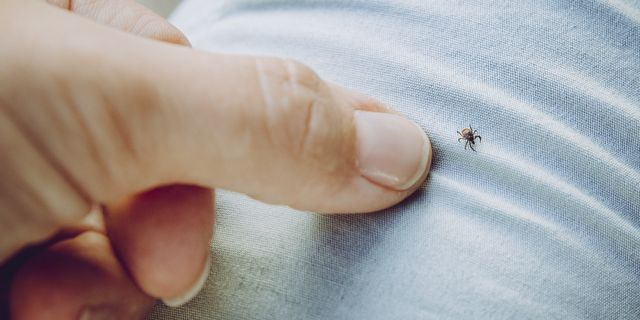 Lyme disease: causes, treatment and prevention