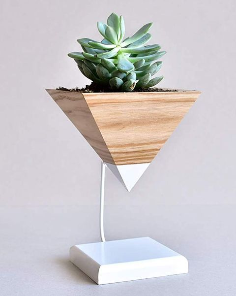 maceta con soporte para cactus