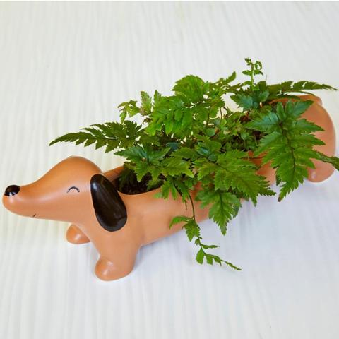maceta con forma de perro salchicha