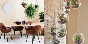 Macetas colgantes para plantas de interior