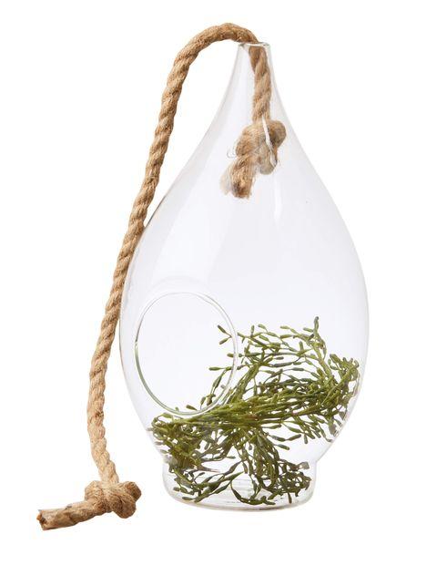 Plant, Bag,