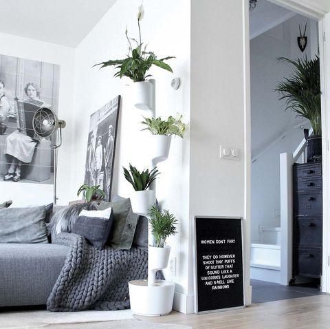 Jardinería: Macetero vertical con plantas purificadoras