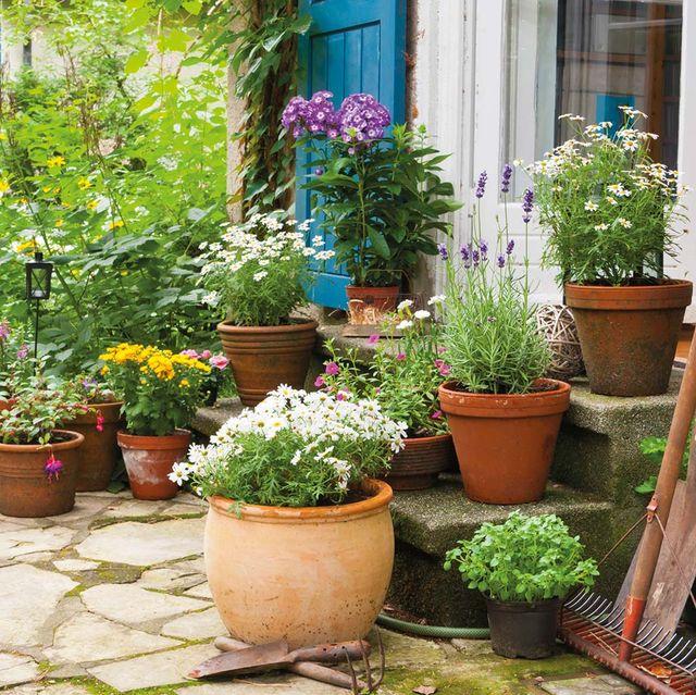 consejos para el cuidado de flores y plantas