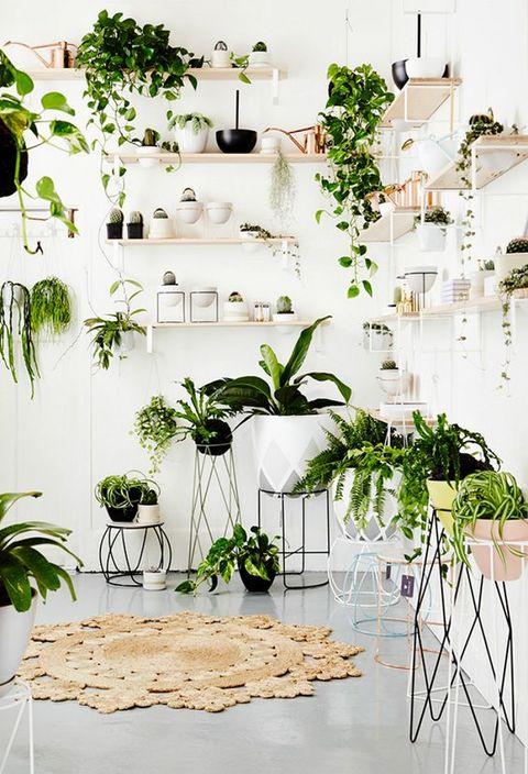 Macetas De Interior Para Plantas Macetas Plantas Y Soportes