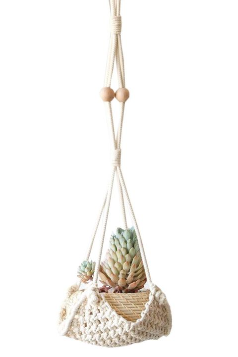best air plant displays