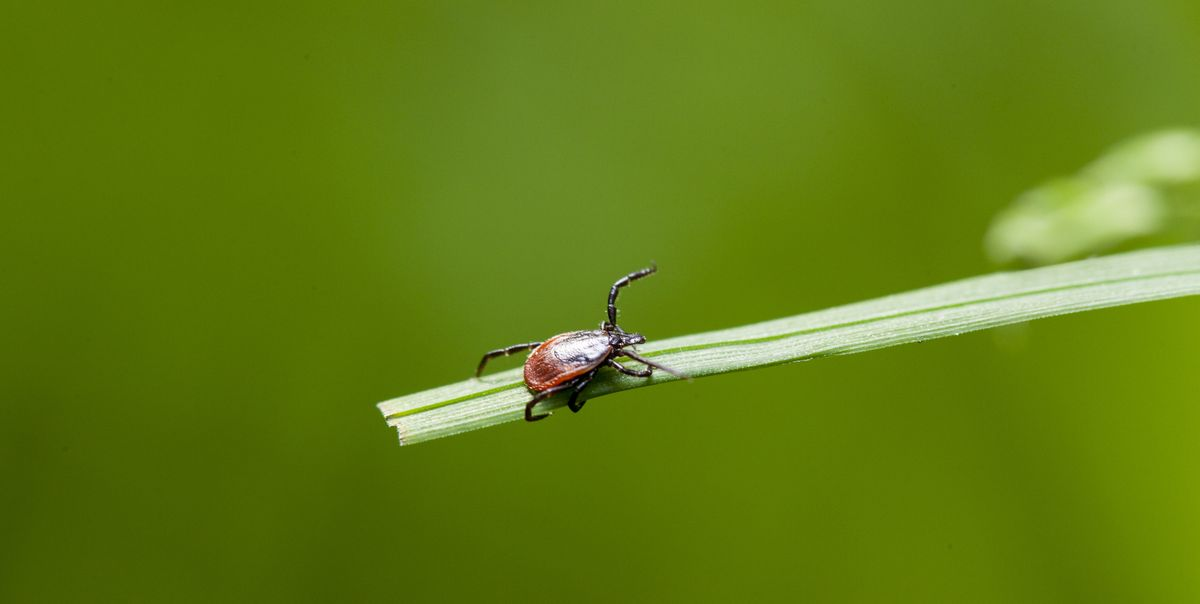 Don't Let Tick Season Ruin Your Next Ride. Follow These Expert Tips to Stay Safe