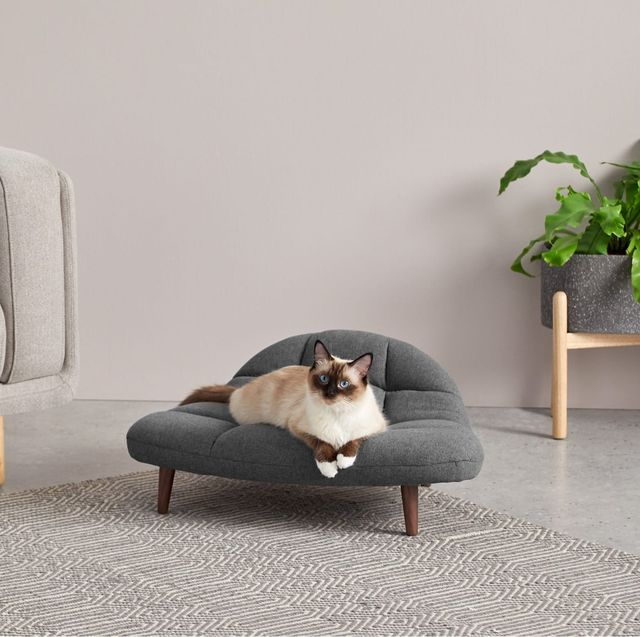 madecom launches pet range to match human sofa