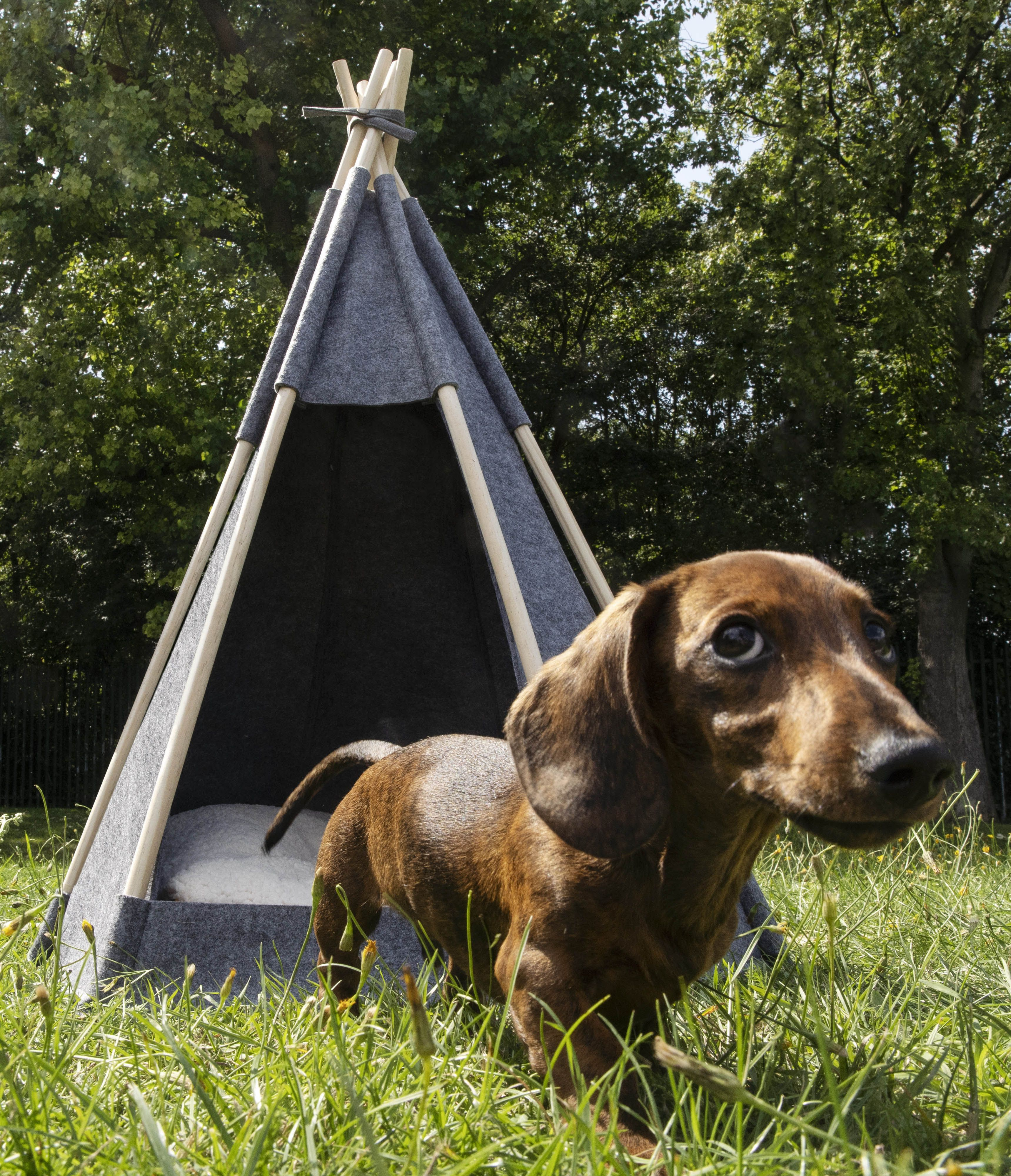 MADE just released a teepee for dogs that's both sweet and stylish