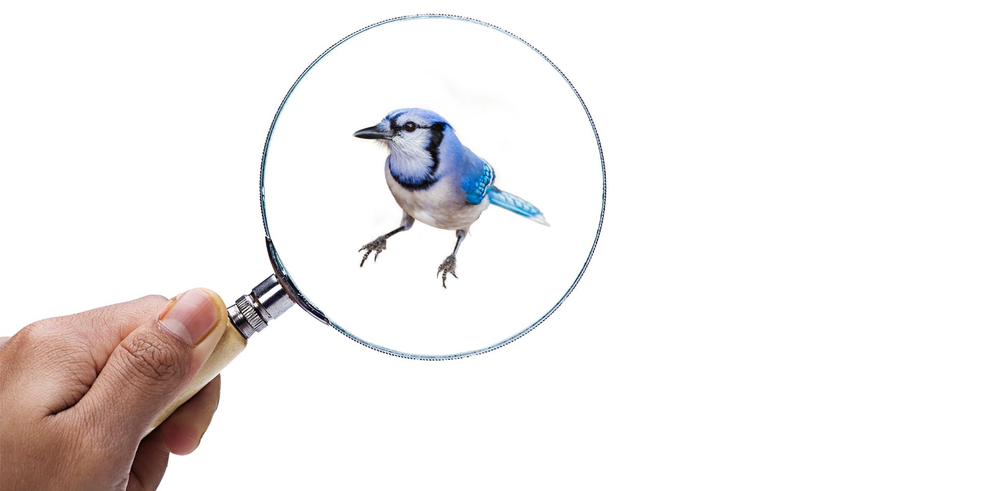 Why Birds Are Getting Smaller