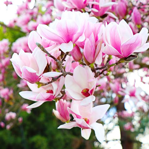 7 trees perfect for planting in a small garden