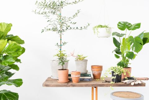 Flowerpot, Leaf, Houseplant, Plant, Herb, Botany, Flower, Room, Fines herbes,