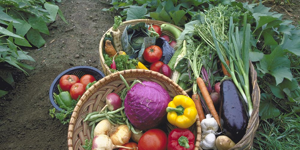 Summer Produce for Health and Performance