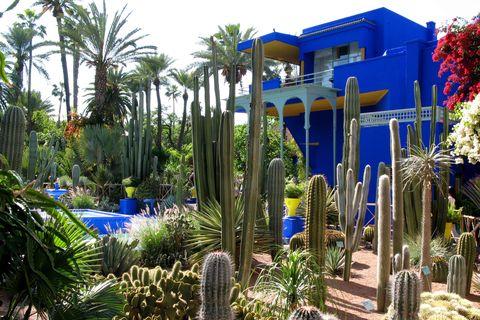cactus and workshop of the majorelle garden botanical garden