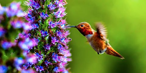 15 Hummingbirds Facts How To Attract Hummingbirds